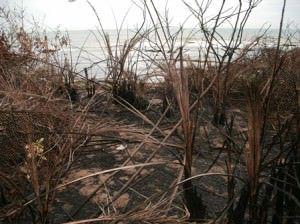 Dias depois da ação do Iema uma área vizinha ao  terreno embargado foi incendiada. Foto: Anderson Soares