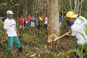 Conguistas cortam a madeira que servirá como mastro para os festejos. Foto: Edson Reis