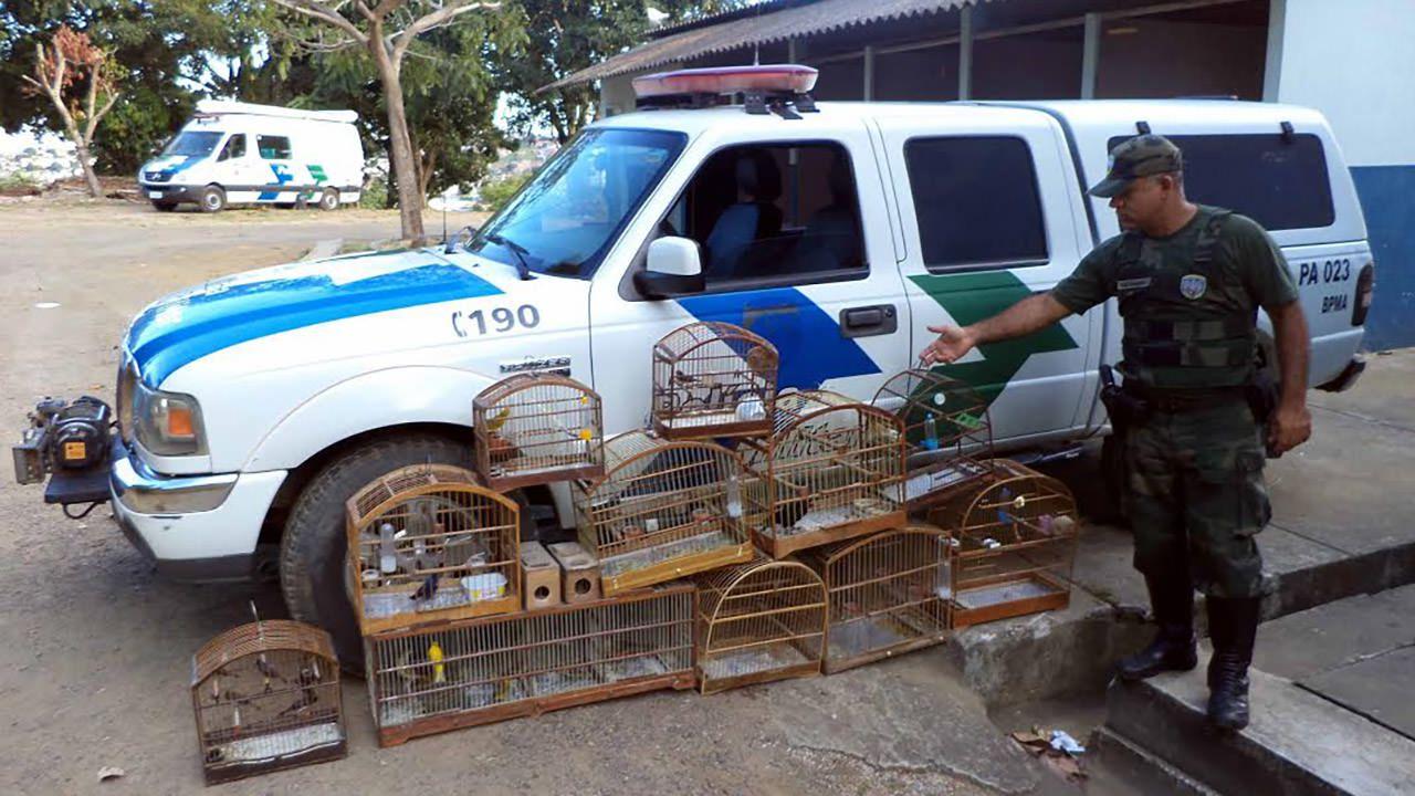 Os 31 pássaros que foram apreendidos estavam localizados nos bairros Nova Carapina, Planalto Serrano I e Planalto Serrano II. Foto: Divulgação PMA