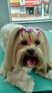 Belinha foi ao Centro Estético Canina Ana Priscilla hoje e já está pronta para curtir o fim de semana. Foto: Divulgação