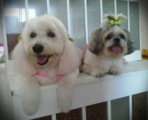 Na Petshop 101 Dálmatas, a estética animal fica por conta da profissional Mabele Gusmão. Na foto, Lory e Luna.  Foto: Divulgação