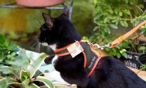 Lembre-se é o gato que te levará para passear, não o contrário. Foto: Divulgação