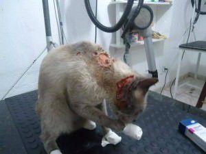 'Bibi' na fase de tratamento. Foto: Divulgação