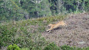 O animal é protegido por lei e agredí-lo ou matá-lo é crime ambiental. Foto: Maycon Wesley