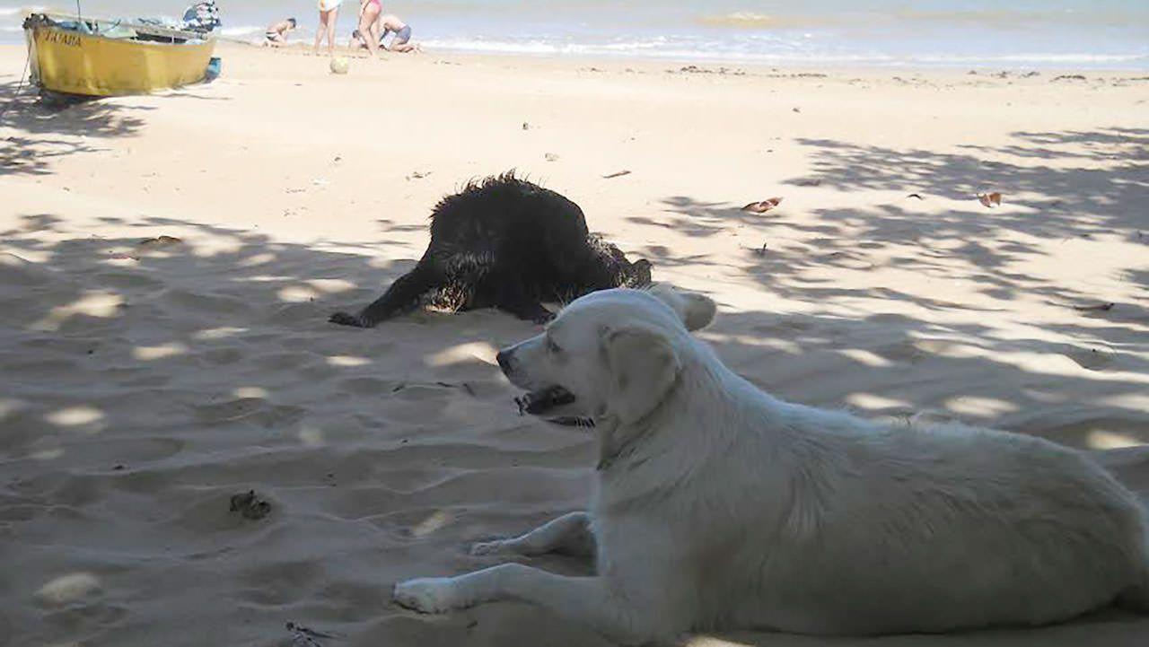 Tanto em Bicanga, quanto em Balneário Carapebus é comum ver cenas como esta nas areias da praias. Foto: Arquivo TN