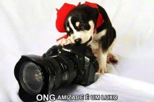 A organização do evento é da ong Amizade é um Luxo e o evento é solidário à causa animal. Foto: Divulgação
