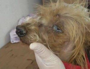 Joaquim está com infecção e anemia e precisa de ajuda. Foto: Divulgação