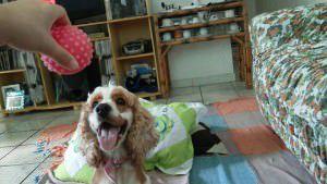 A cadela Rebecca foi roubada, segundo sua dona. Foto: Divulgação