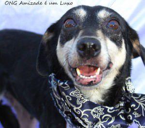 Um dos animais disponíveis para adoção é a Filó do CCZ da Serra. Foto: Divulgação