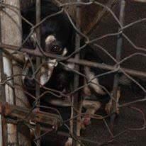 Filó no CCZ da Serra à espera de um lar. Foto: Divulgação ong Amizade é um Luxo