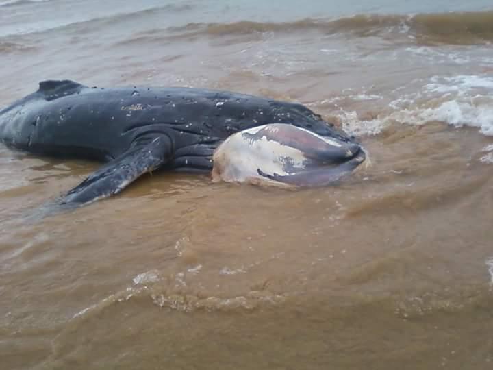A baleia foi encontrada morta hoje (5) em Manguinhos. Foto: Divulgação leitor