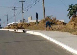 O flagrante aconteceu no início da manhã desta quinta-feira (22). Foto: Divulgação / Leitor TN
