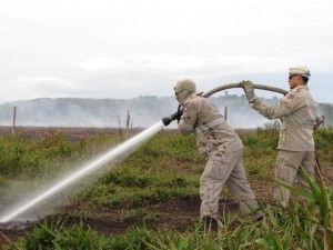 Bombeiros lutando para apagar o fogo no solo de turfa em fevereiro de 2015. Foto: Arquivo TN / Bruno Lyra
