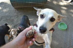 Adotar é um ato de amor. No local haverá diversos cães para adoção. Foto: Divulgação EBC