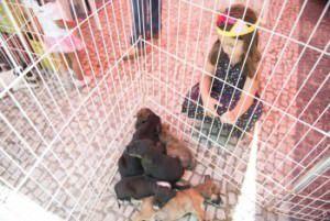 Cinco filhotes estarão disponíveis na feira de adoção. Foto: Divulgação Prefeitura de Vitória