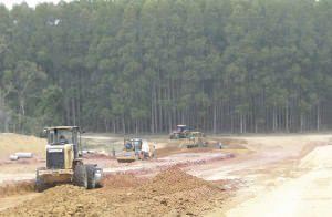 Cultivo de eucalipto da Fibria às margens do inacabado Contorno de Jacaraípe: empresa tem cerca de 2,5 mil hectares. Foto: Arquivo TN /Fabrício Ribeiro
