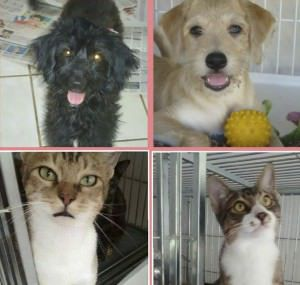 Cães e gatos estarão disponíveis para adoção na feira. Foto: Reprodução Facebook