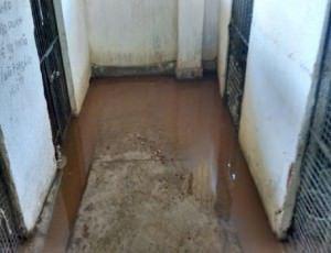 Situação dos canis no CCZ da Serra (atual Vigilância Ambiental em Saúde). Foto: Divulgação