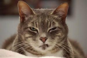 Na reunião serão ouvidos um síndico de um condomínio de luxo, na Serra, onde gatos foram envenenados e o advogado de acusado de matar a gata da Pedra da Cebola. Foto: Divulgação
