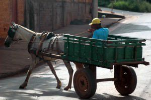 O projeto de lei da deputada Janete de Sá quer carroças tracionadas a força humana ou por veículos a motor em cidades com mais de 50 mil moradores. Foto: Divulgação