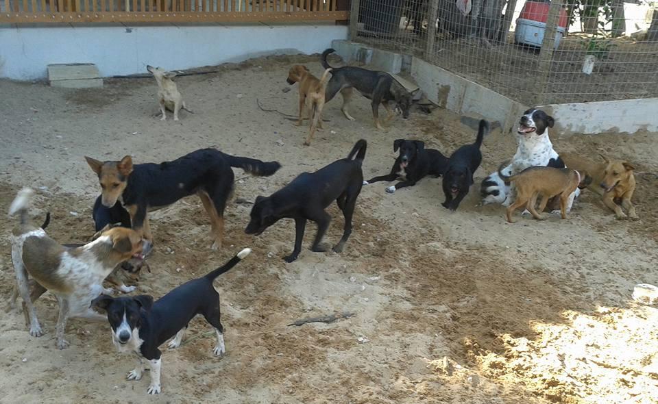 Serra vai ter Conselho Municipal de Proteção Animal