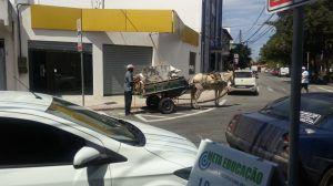 Vereadores não aprovam proibição de carroças na Serra