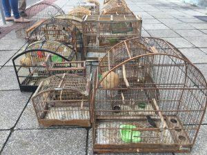 Câmara aprova doação de área para ampliação do Centro de Triagem de Animais Silvestres