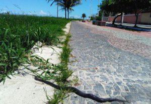 Em Nova Almeida cobras em calçadão assustam moradores