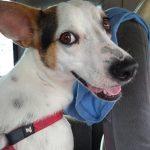 Cães e gatos castrados para adoção em Vila Velha no sábado