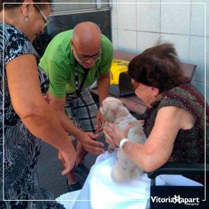 Animais de estimação visitam pacientes internados e ajudam na recuperação