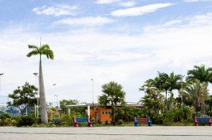 Parque da Cidade vai ganhar mais de 500 novas árvores