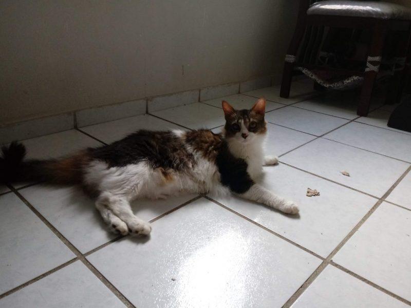 048898f8a Especialista alerta para a doença renal nos gatos