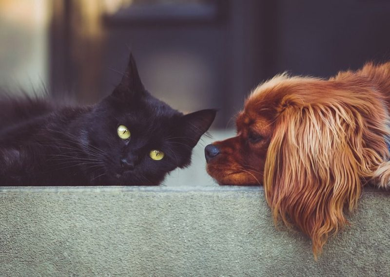 6eaf1febd Cães e gatos também passam pela adolescência