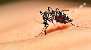 Veja os bairros onde mais se pega dengue na Serra