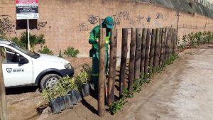Prefeitura planta árvores e cerca terreno para acabar com lixão na Serra