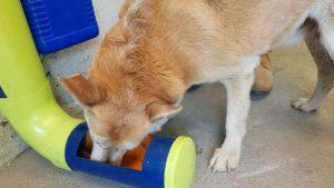Câmara aprova a instalação de comedouros e bebedouros para animais de rua