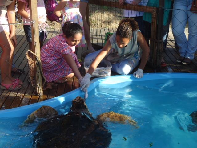 Vida das tartarugas para alegrar garotada no Dia das Crianças